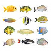 stock photo of bass fish  - Great collection of a tropical fish on a white background - JPG