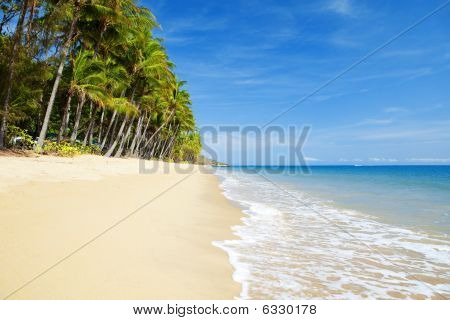 Deserted Tropical Beach With Palm Trees