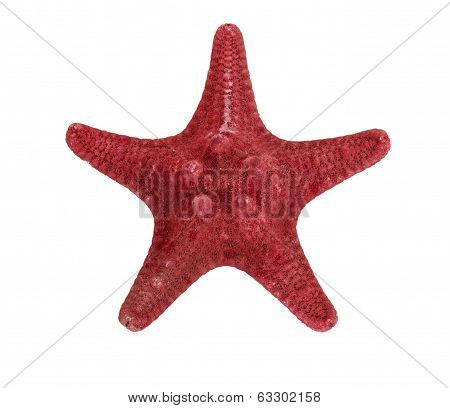 The Common  starfish isolated on a white background.
