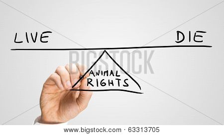 Animal Rights - To Live Or To Die
