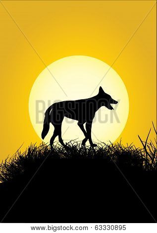 One Dingo And Moon