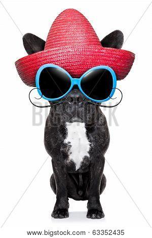 Mexican Bad Dog