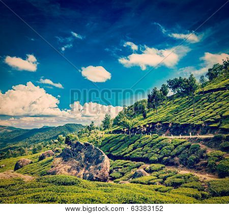 Vintage retro hipster style travel image of Kerala India travel background - green tea plantations in Munnar, Kerala, India