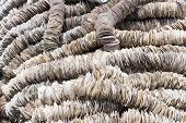 image of oyster shell  - Background of scallop shells arranged on ropes to be used in oyster farming as settling substrate for the oyster larvae - JPG