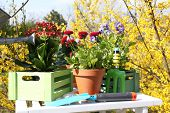 Beautiful flowers in flowerpots and gardening tools, outdoors
