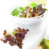 picture of spinner  - Salad spinner with iceberg and red lettuce diet concept - JPG