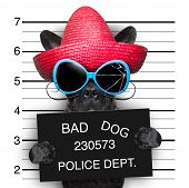 stock photo of mexican-dog  - mugshot of very bad mexican wanted dog - JPG