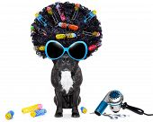 picture of hairspray  - dog at hairdresser with afro black hair and glasses - JPG