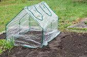 pic of collapse  - Frame collapsible mini greenhouses installed in the vegetable garden - JPG
