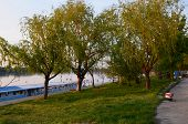 Danube river nature