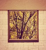 a tree reflection in a window on a building done with a warm filter