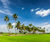 image of tamil  - Rural Indian scene  - JPG