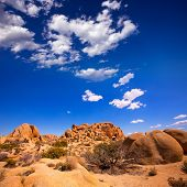 Skull rock in Joshua tree National Park Mohave desert Yucca Valley California USA