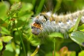picture of caterpillar  - A close - JPG