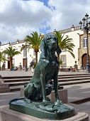 foto of canary  - Dog in Front of the Cathedral in Las Palmas Gran Canaria Spain - JPG
