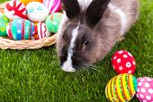 Rabbit and easter eggs in green grass