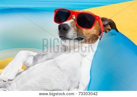 Dog Sleep In Summer