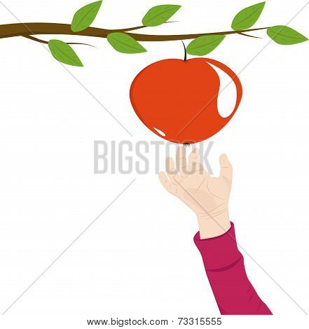 Hand The Child Reaches For An Apple