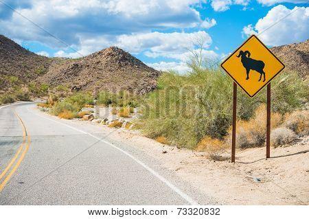 Desert Bighorn Sheep Sign