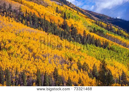 Autumn Foliage Colorado