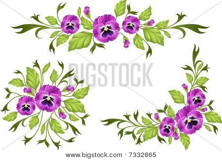 Pansy borders