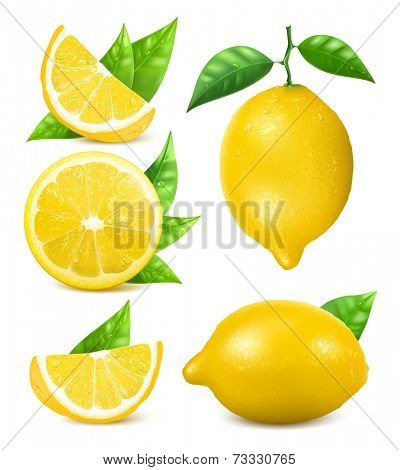 Fresh lemons with leaves. Collection of different vector illustration.