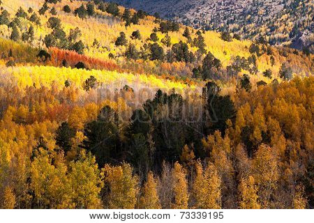 Cloud shadows and aspens