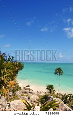 Tulum Mayan Riviera Tropical Beach Palm Trees