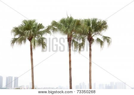 Palm trees by a resident district on white background