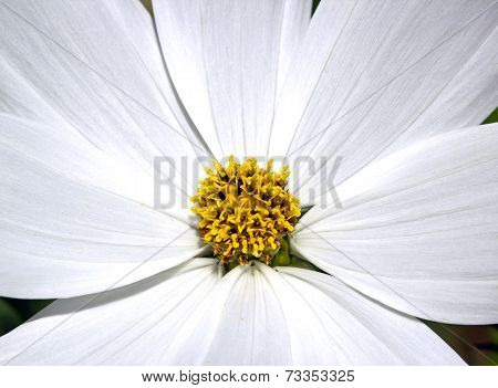 The heart of a white flower