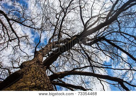The Trunk And Branches Of The Tree Against The Cloudy Sky