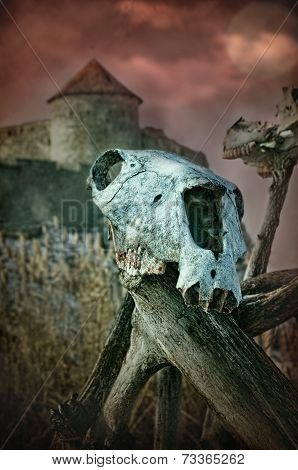 Gothic Skull Of A Horse Near The Old Fortress