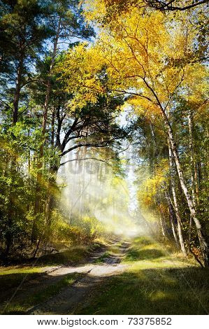 Beautiful Morning In The Misty Autumn Forest With Sun Rays