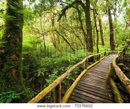 Jungle Landscape. Wooden Bridge At Misty Tropical Rain Forest. Travel Background At Doi Inthanon Par