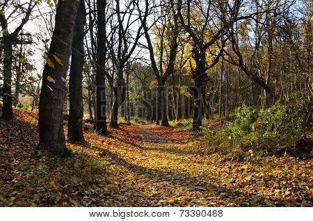Sun shining through the autumn woods