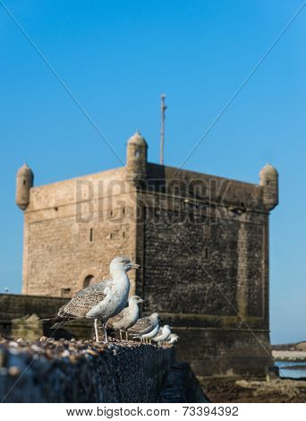 The Seagull On The Wall At Skala Du Port