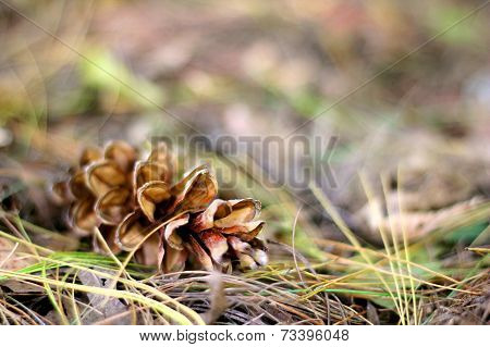 Pine Cone Laying In The Fall Leaves Background