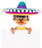 pic of mexican-dog  - cute puppy dog wearing a mexican hat and holding white paper banner - JPG