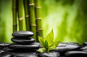 stock photo of stone-therapy  - zen basalt stones and bamboo  - JPG