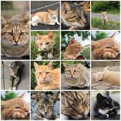 picture of tabby cat  - Ginger tabby cat resting on the roof in the cat village of Houtong - JPG