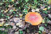 stock photo of toadstools  - one mushroom - JPG