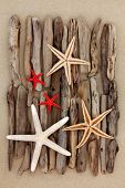 foto of driftwood  - Starfish shell selection and driftwood pieces over sand background - JPG