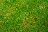 pic of lawn grass  - Grass lawn texture from directly above with a few dry patches of grass - JPG