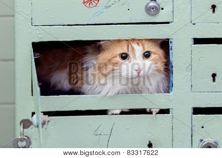 Red Cat In Mailbox