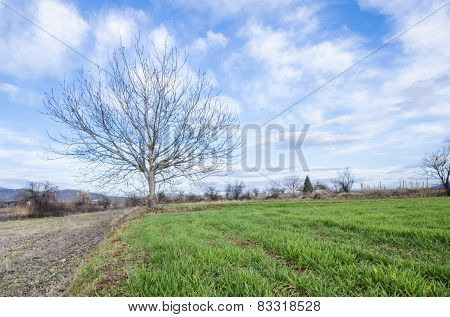 Single tree with no leaves on green grass