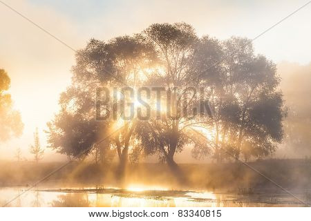 Misty Solar Dawn near the river Seversky Donets