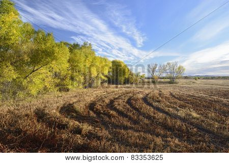 Fields and Colorful Cottonwoods in Autumn
