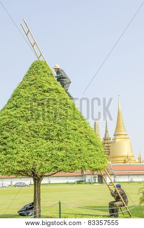 BANGKOK, THAILAND, DECEMBER 26, 2013: Royal Palace and Wat Phra Kaeo Complex - gardeners trim a tree