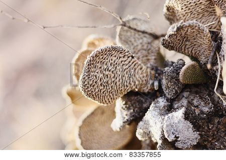 Closeup view on cactus with textured surface