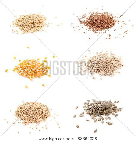 Organic Seeds: Corn, Flax, Buckwheat, Wheat, Pumpkin Seed, Sunflower Seeds